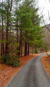 Pine Drive in Manifesting Legacies